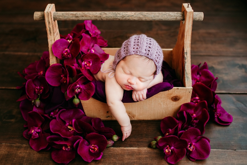 Newborn Photography, little girl asleep in a tool box with flowers around her